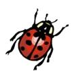 Lady Bug Cut-Out